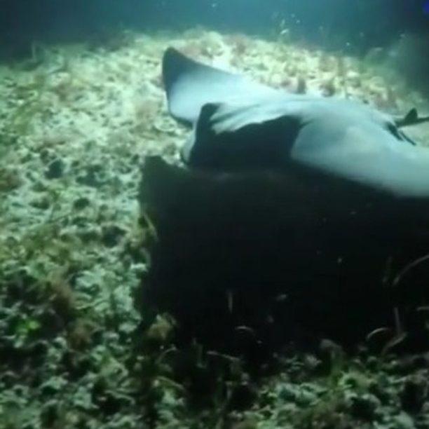 NZ scuba diving trips