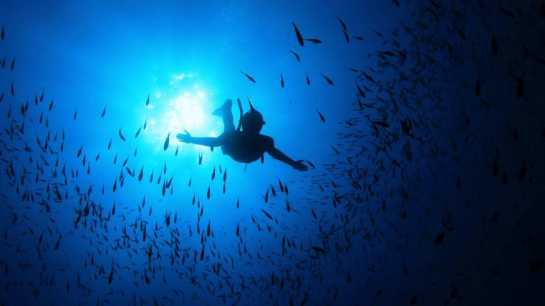 freediving1